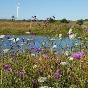 Schleswig-Flensburg ist aktiv im Natur- und Artenschutz